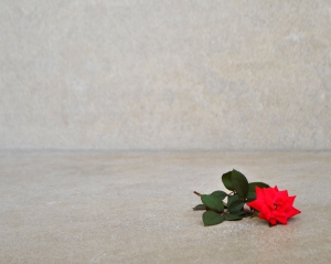 rose for helen 810